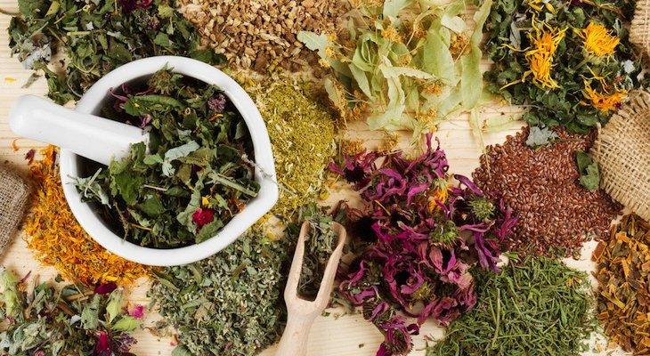 Лекарственные растения на страже здоровья